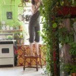 decoraca-plantas-casa-rio-magazine