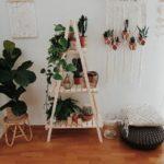 plantas-suspensas-rio-magazine2