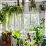 plantas-suspensas-rio-magazine5